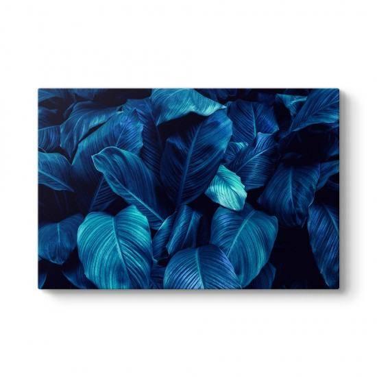 Mavi Yelken Çiçeği Yaprakları Tablosu