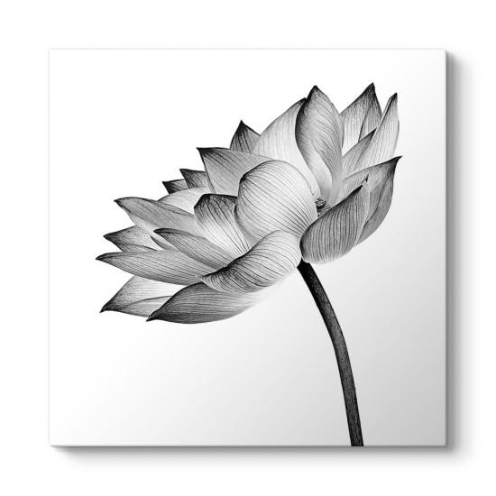 Siyah Beyaz Nilüfer Çiçeği Tablosu