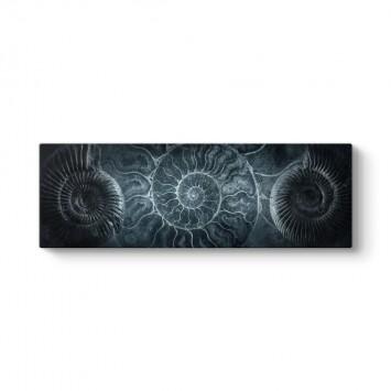 Ammonit Deniz Kabuğu Tablosu