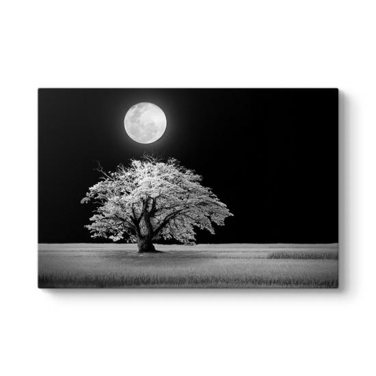 Beyaz Ağaç Ve Ay Manzara Tablosu
