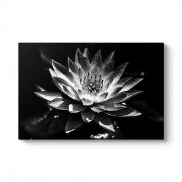 Siyah Beyaz Lotus Çiçeği Tablosu