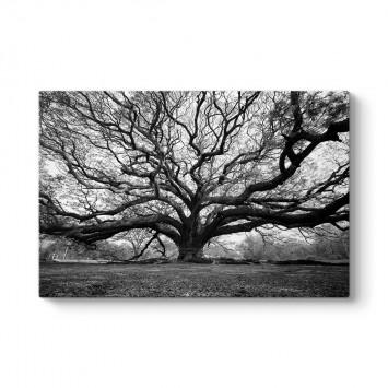 Yağmur Ağacı Tablosu