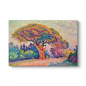 Paul Signac - The Pine Tree at Saint Tropez Tablosu