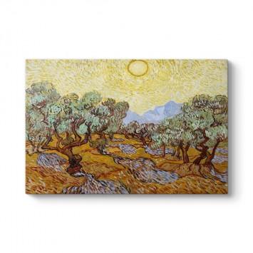 Vincent Van Gogh - Olive Trees Tablosu