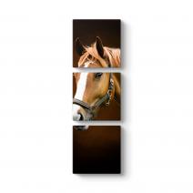 Kahverengi At Profil Tablosu