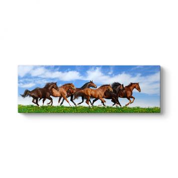 Kahverengi Atlar Panorama Tablosu