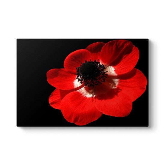 Kırmızı Çiçek Duvar Tablosu