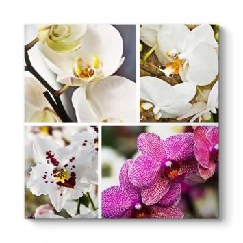 Orkide Floral Tablo