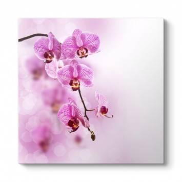 Pembe Orkide Tablosu