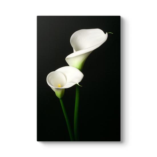 Zambak Çiçeği III Tablosu