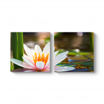 Sudaki Lotus Tablosu