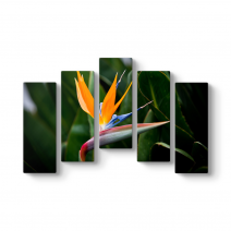 Kraliçe Çiçeği I Tablosu