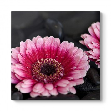 Gerbera Çiçeği Tablosu