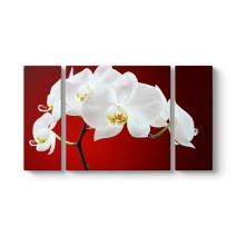 Beyaz Orkide Tablosu
