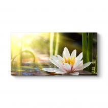 Sade Nilüfer Çiçeği Tablosu