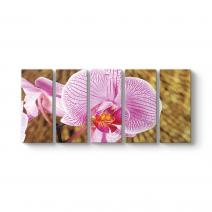 Natürel Orkide Tablosu