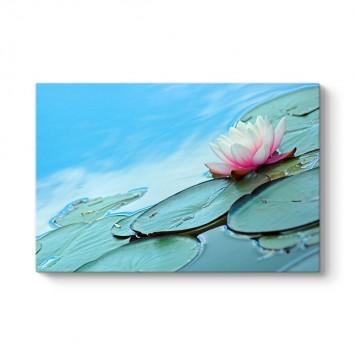 Nilüfer Çiçeği Gölet Tablosu