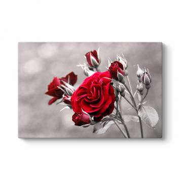Kırmızı Güller Tablosu