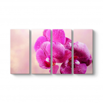 Fuşya Orkide Tablosu