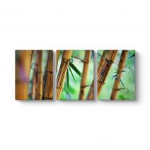 Bambu Ağaçları Tablosu