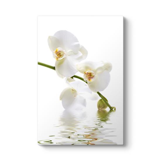 Orkide Çiçeği Tablosu