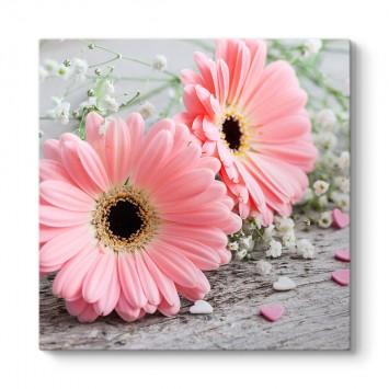 Pembe Gerbera Çiçeği Tablosu