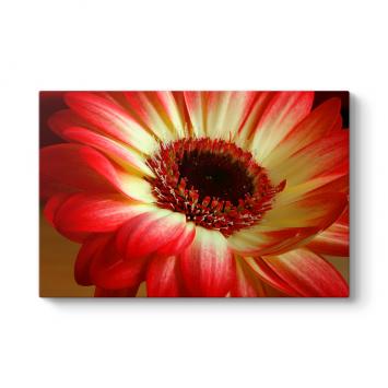 Kırmızı Gerbera Çiçeği Tablosu
