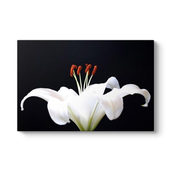 Blossom Tablosu