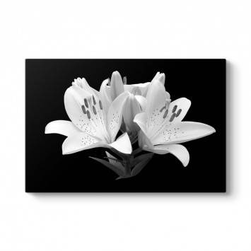 Siyah Beyaz Soyut Çiçek Tablosu
