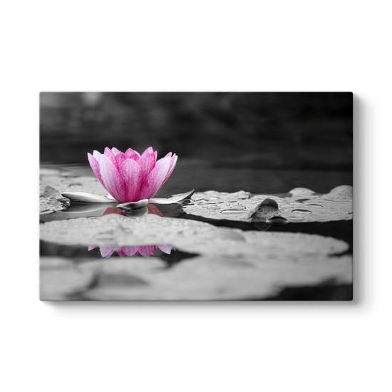 Pembe Nilüfer Çiçeği Tablosu