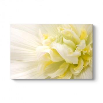White Flower III Tablosu