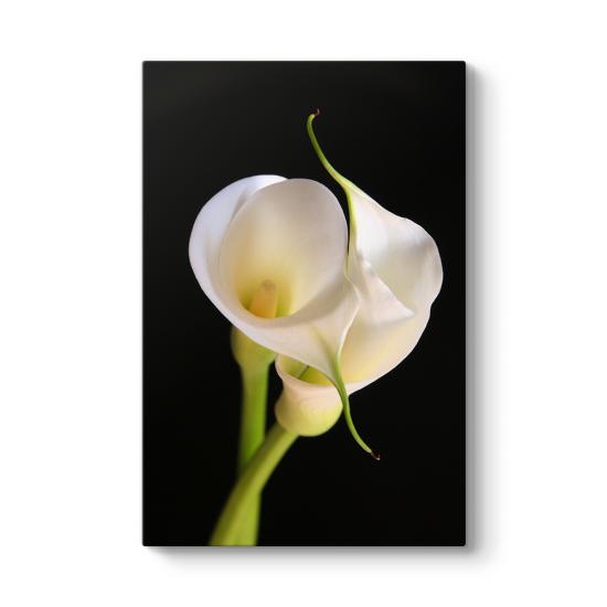 Zambak Çiçeği I Tablosu