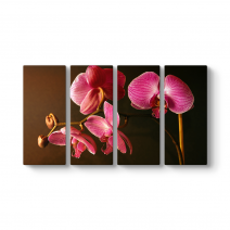 Orkide Art Tablosu