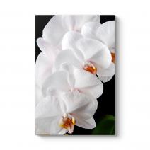 Orkide Çiçeği II Tablosu