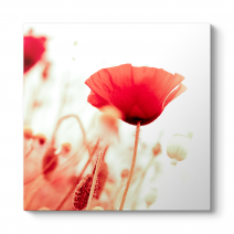 Soft Gelincik Çiçeği Tablosu