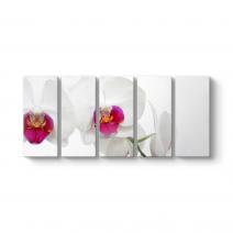 Orkide Tomurcuk Tablosu