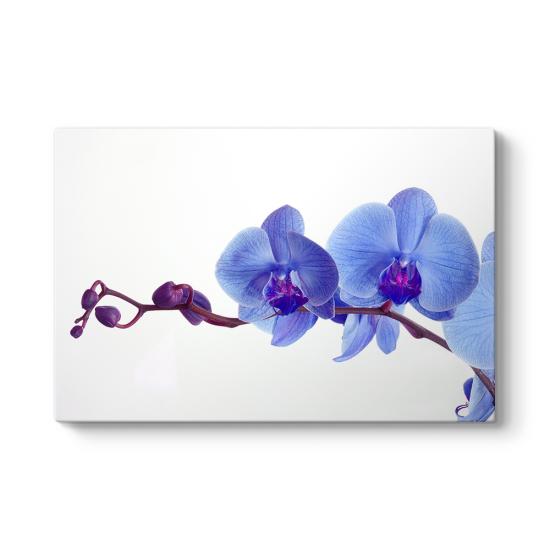Mor Orkide Tablosu