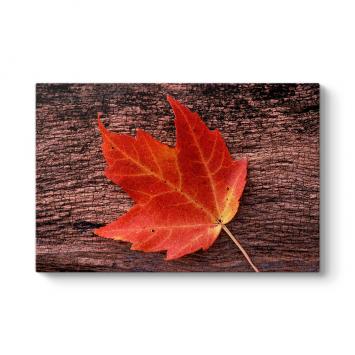 Kırmızı Yaprak Tablosu