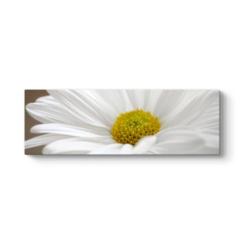 Papatya Çiçeği Tablosu
