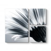 Siyah Beyaz Papatya Tablosu