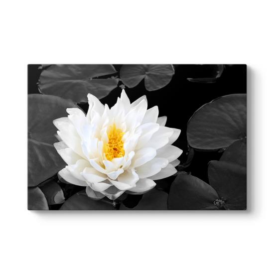 Lotus Güzelliği Tablosu
