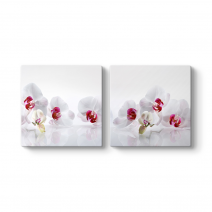 Beyaz Orkide Panorama Tablo