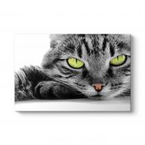 Sarı Gözlü Kedi Tablosu