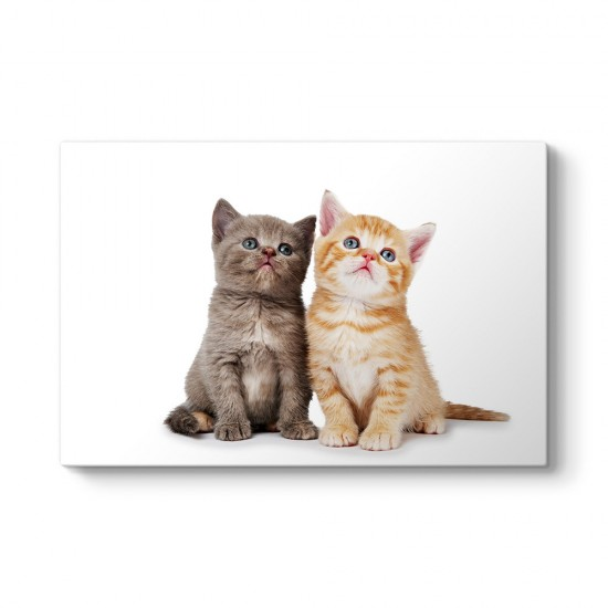 Mavi Gözlü Kediler Tablosu