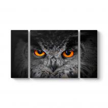 Baykuş Gözleri Tablosu