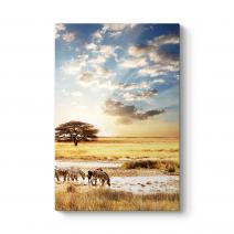 Afrika Zebra Tablosu