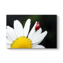 Uğur Böceği Papatya Tablosu