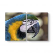 Papağan Tablosu