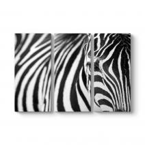 Zebra Tablosu