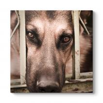 Kurt Köpeği Tablosu